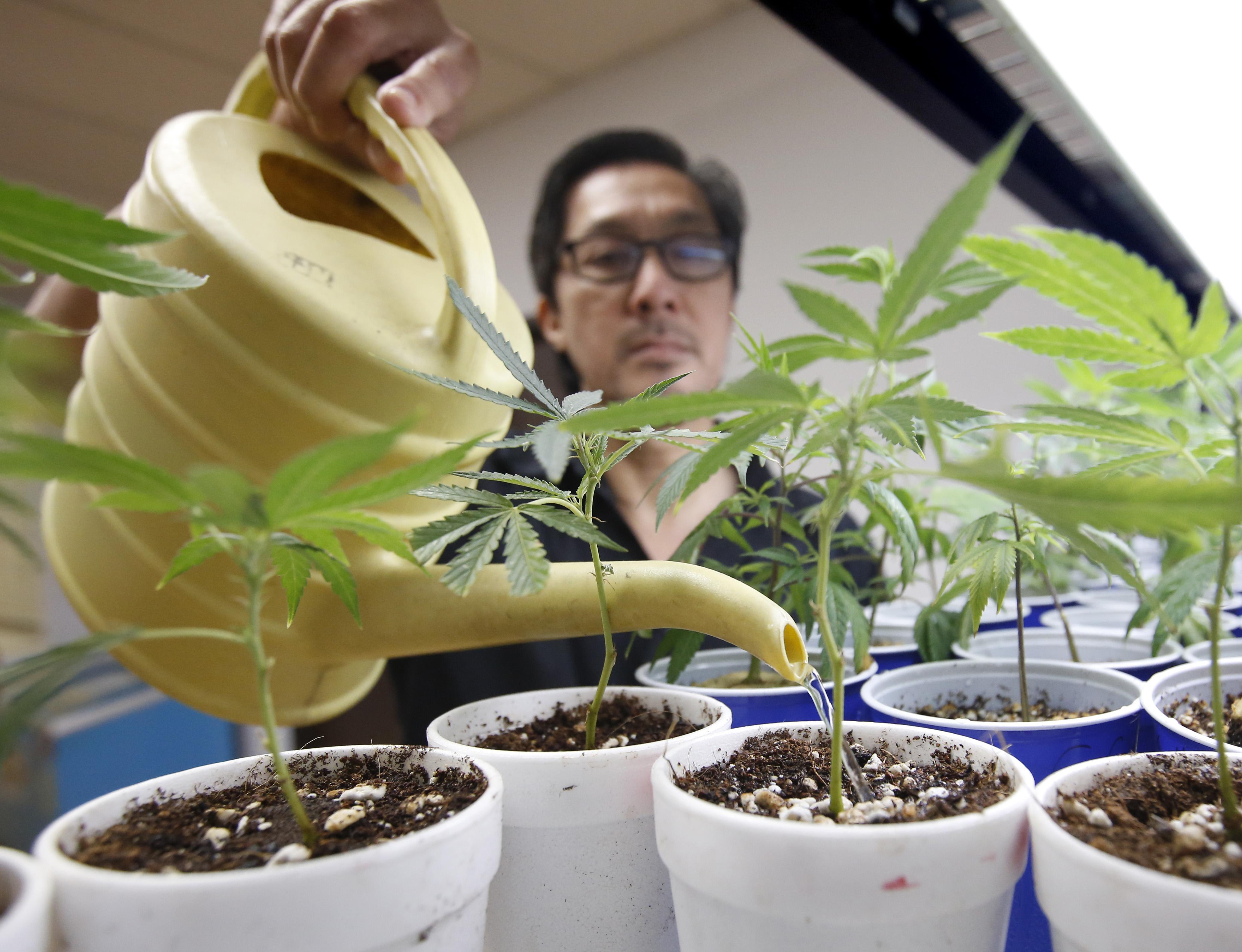 席爾拉馬德里欲禁止大麻在店裡銷售。帕沙迪納星報