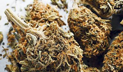 萬斯宣布停止對持有或吸食大麻案件的起訴。資料圖片