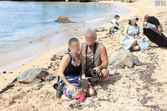 愛護動物人士呼籲民眾,不要與海龜太近距離接觸。電視截圖