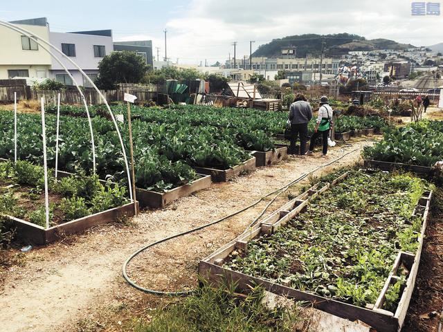 方李邦琴亞裔社區園地的菜園。記者李澤彤攝