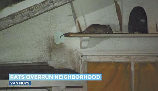 南加州凡奈斯(Van Nuys)一間民宅在入夜後鼠輩橫行。KABC