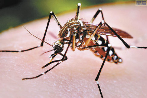 53歲Robert Johnson感染西尼羅病毒死亡,為洛縣首例。 網路圖
