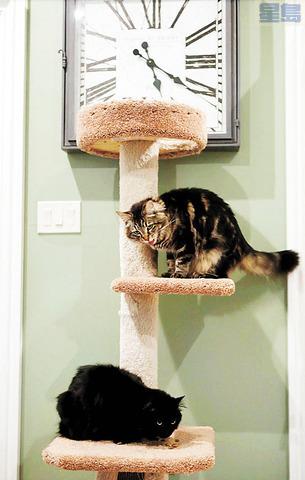 兩隻貓Louise(上)Tina(下)住 1500元月租公寓。網絡圖片
