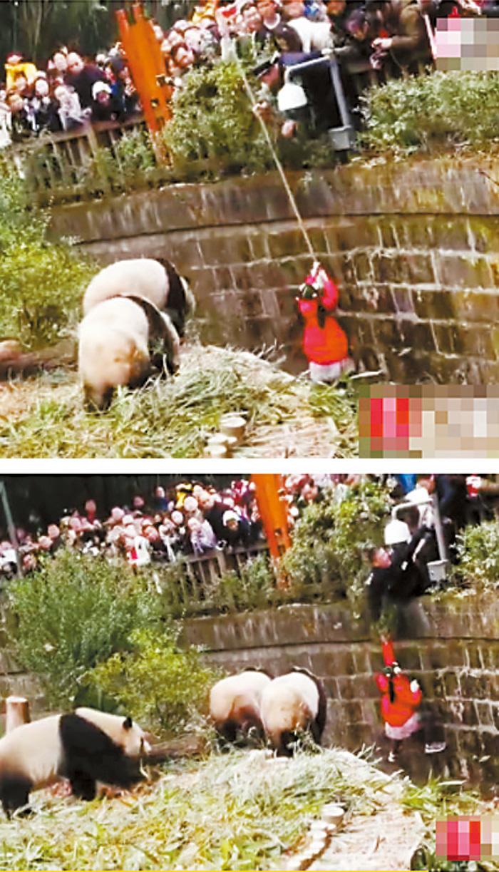 保安先用竹竿拉女孩未果(上圖),之後倒吊身體將女童拉離(下圖)。網上圖片