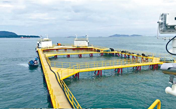 漁護署希望引入現代化的高科技外海養殖技術,增加養魚產量。