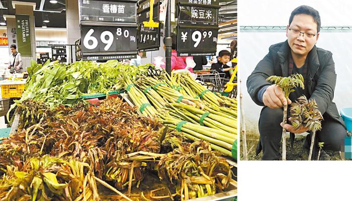 圖為超市貨架上擺放的香椿,價格很貴(左圖)。種植者正在採摘香椿(右圖)。網上圖片