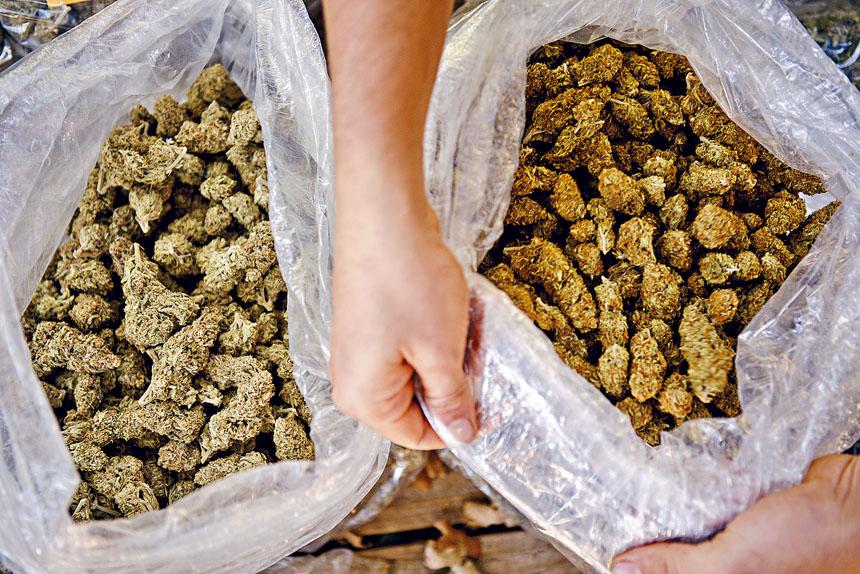 新州的大麻合法化法案,將按每盎司42元徵稅。Hilary Swift/紐約時報