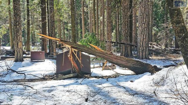 加州今冬雨雪豐沛。圖為13日優山美地國家公園一處防熊食物箱被大雪壓倒的樹枝壓壞。國家公園局/美聯社