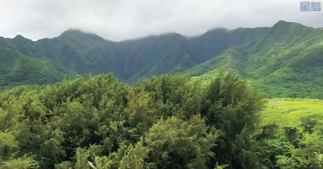 發生墮機的叢林茂密溪谷。電視截圖