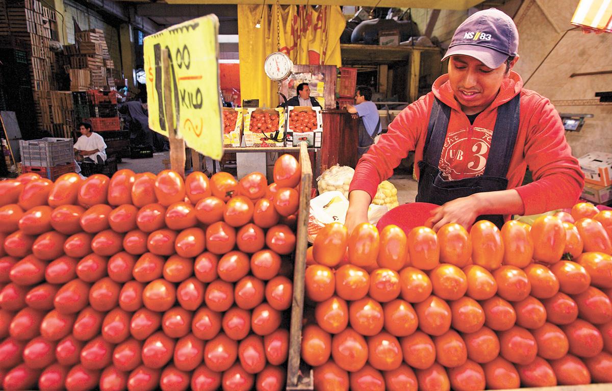 美國上周對墨西哥進口蕃茄提高關稅,圖為一名墨西哥工人在挑揀蕃茄。美聯社資料圖片