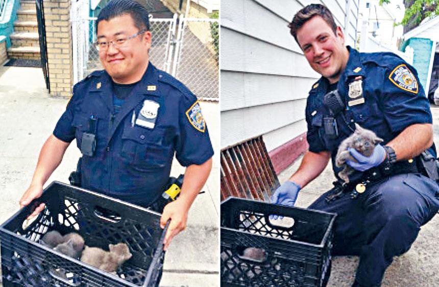兩名皇后區警員在工作期間救出4隻小貓。