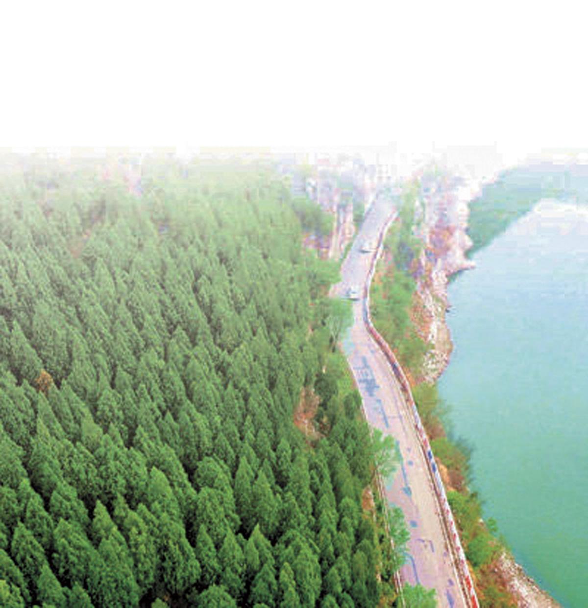 最早綠化的山頭。網上圖片