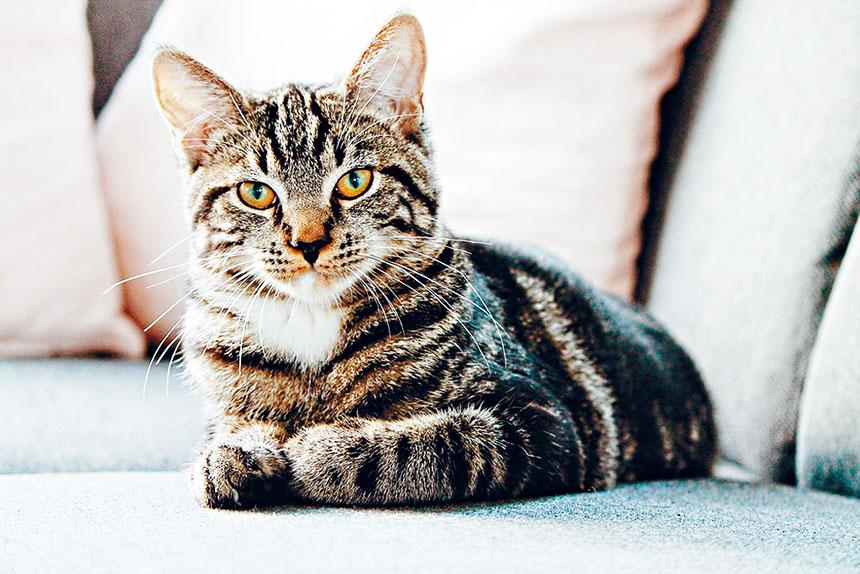 州長柯謨於周一簽署禁貓咪除爪手術法案。資料圖片
