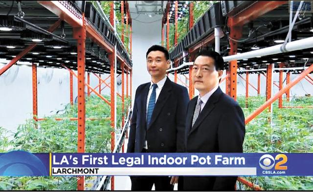 洛杉磯首座合法室內大麻栽種農場擁有者James Chung和Conrad Yun。CBSLA