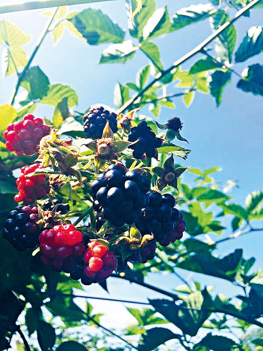 大華府浙江同鄉會將舉辦夏日採摘水果和野餐活動。