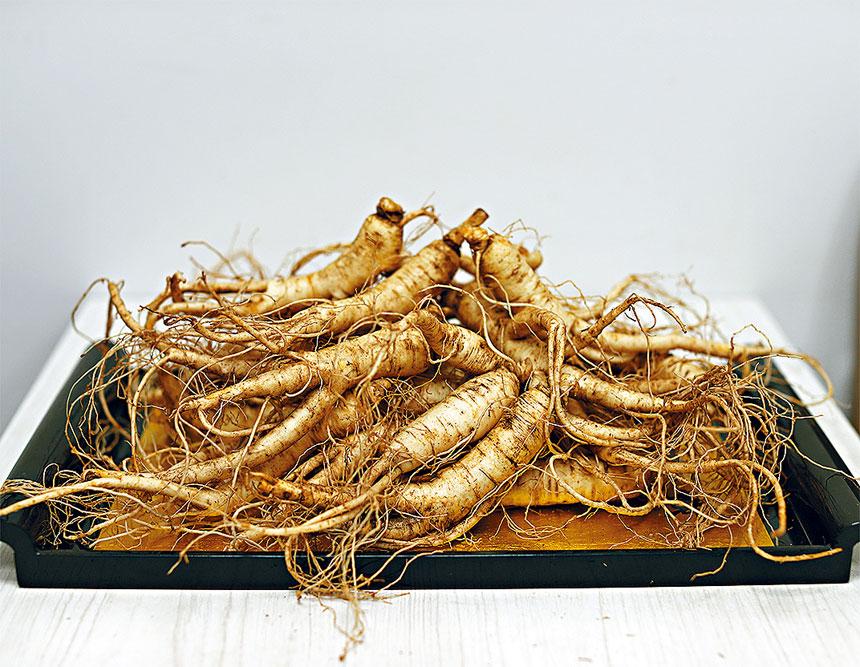 九月和十月是威州花旗參的採收季節,天仁茗茶每年都會在此時不惜成本把新鮮花旗參空運到埠上市,顧客應把握機會儘快採購。