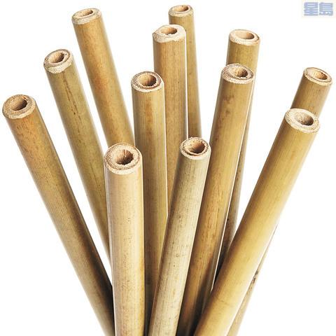 市議員建議改用竹吸管。網絡圖片