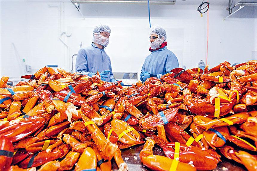 緬因州的一家龍蝦加工工廠。
