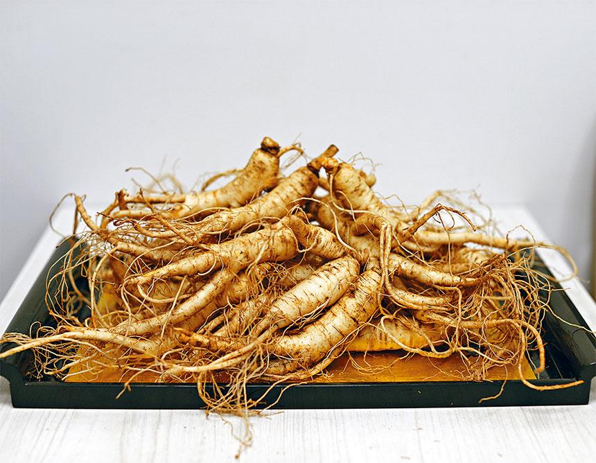 9月和10月是威州花旗參的採收季節,天仁茗茶每年都會在此時不惜成本把新鮮花旗參空運到埠上市,顧客應把握機會,趁鮮採購。