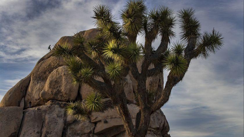 約書亞樹國家公園近5年遊客量翻倍 公園將進行擴建計畫。洛杉磯時報