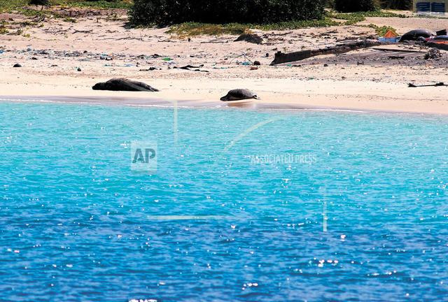 夏威夷海灘。美聯社