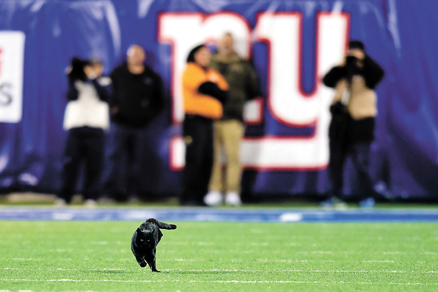 紐約巨人隊和牛仔隊比賽第二節,一隻黑貓在球場上奔跑。法新社