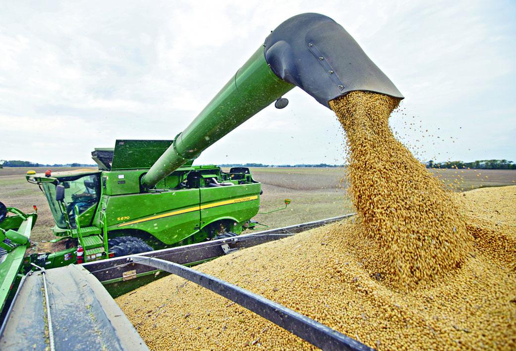 中國近日持續採購美國大豆,並豁免進口關稅。