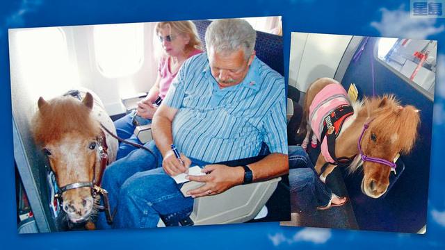 ■運輸部新建議,計劃限制服務類動物登上飛機。允許服務動物和情感支撐類動物一直是個熱議的話題。資料圖片