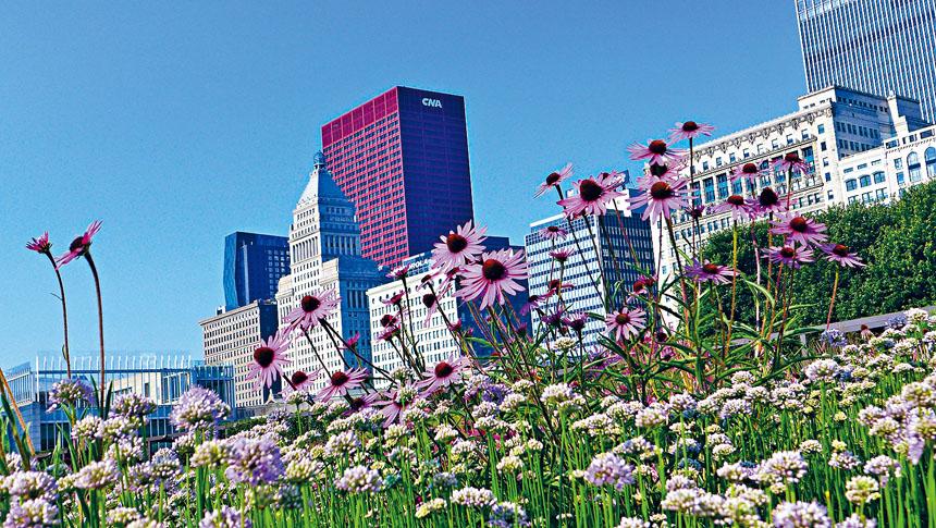 芝加哥市長萊德福特揚言將關閉芝市的公園,如果民眾再不遵守州長公布的「居家令」。她希望公眾了解,大家都遵守居家令,病毒將不會在社區之間傳播,等待春天到來時,人們都有機會再看到明媚的春光。本報檔案照、梁敏育攝