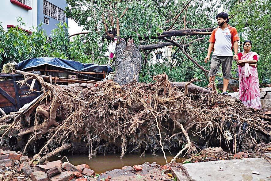 加爾各答路邊大樹被狂風吹倒。 路透社