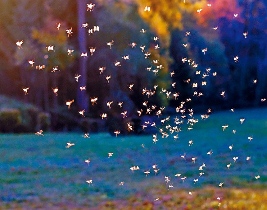 紐約市衛生局展開夏季消滅蚊子幼蟲行動,在皇后區和紐約市其他行政區的公園,沼澤和濕地地區噴洒環保的殺幼蟲劑。