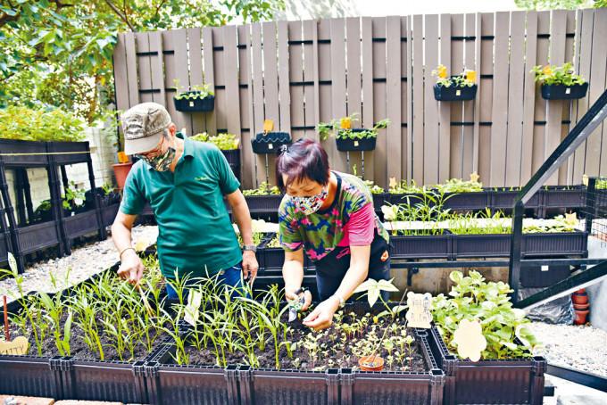 居民合作自行發展苗圃。