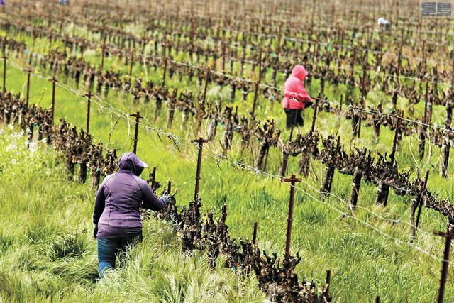 州議員試圖推動法案幫助農工。美聯社資料圖片