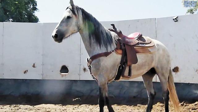 南加范登堡基地新添生力軍,五歲駿馬Ghost加入軍用巡邏馬匹團隊。美國太空軍推特