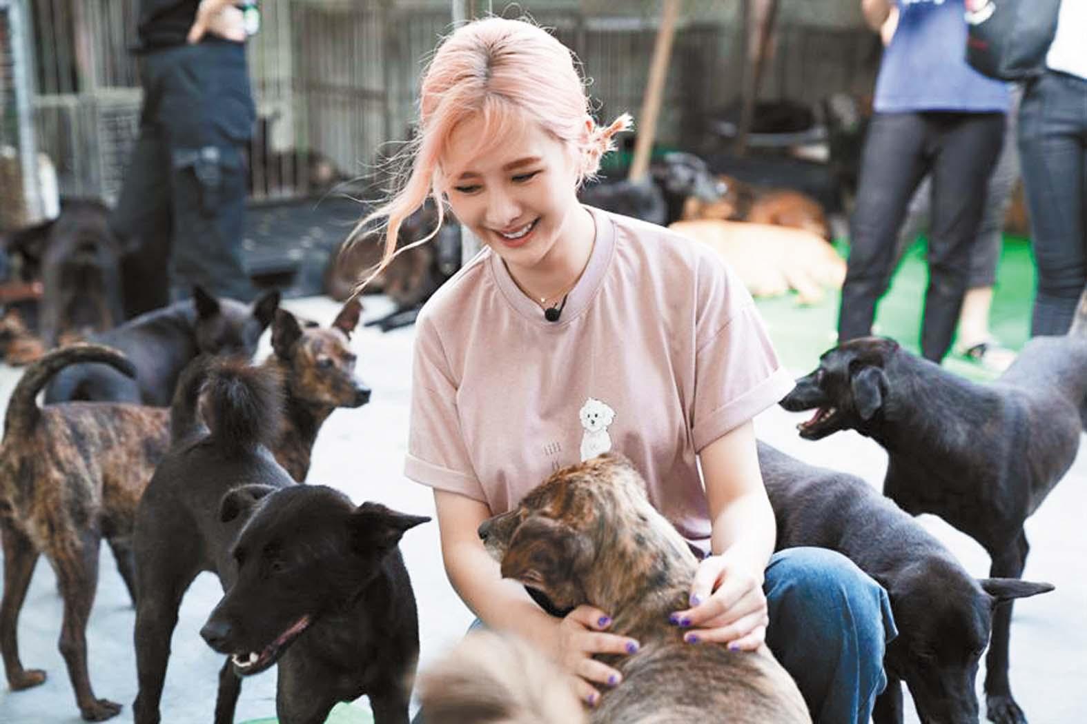 ■安心亞擔任「喵汪守護大使」,日前到流浪動物之家體驗一日志工,為狗 狗洗澡。 網上圖片