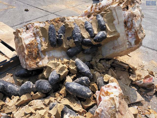 CBP在聖地牙哥特卡特入境口岸發現藏在巨石中的560磅冰毒和可卡因,市值約400萬美元。CBP
