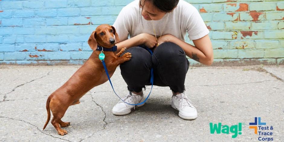 紐約市新冠檢測與追蹤小組新增寵物服務,解決病人後顧之憂。圖片來自醫管局網站