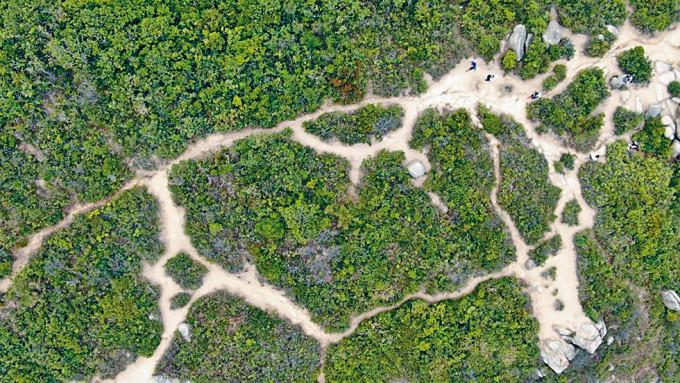龍脊南面山坡並非港島徑的走,但被遊人行出有如蜘蛛網的小路。