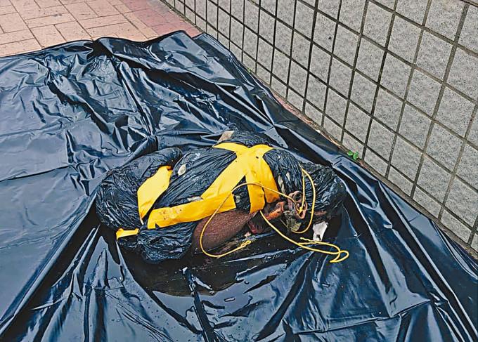 唐狗被綁上水龍頭浮屍海中,警方撈起狗屍調查。