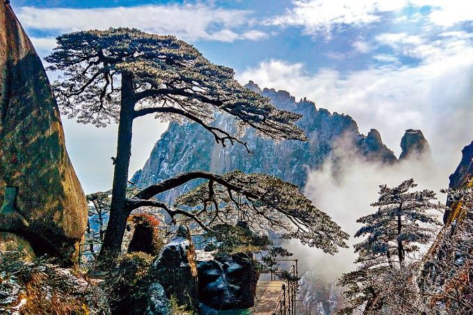 迎客松是黃山和安徽省的標誌。