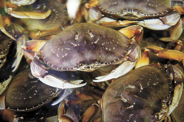 今年感恩節可能吃不到珍寶蟹。美聯社資料圖片