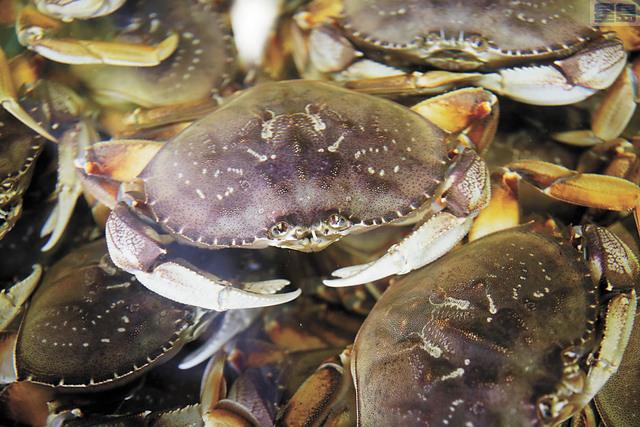 商業捕蟹季再延至12月16日才開始。美聯社