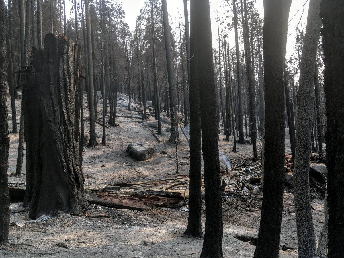 加州史上6場最嚴重、燒毀林地面積最多的山火中,5場都發生在今年。 推特圖片