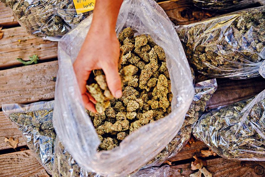 新州大麻合法化已進入最後直路。 Hilary Swift/紐約時報