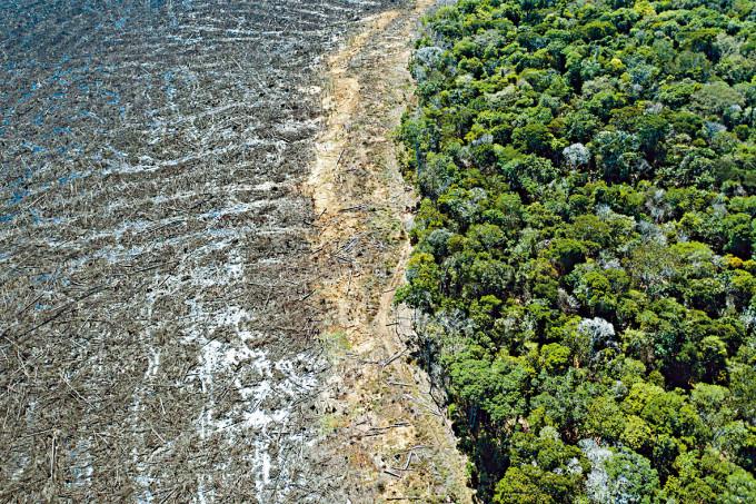 巴西馬托格羅索州遭砍伐的林區。
