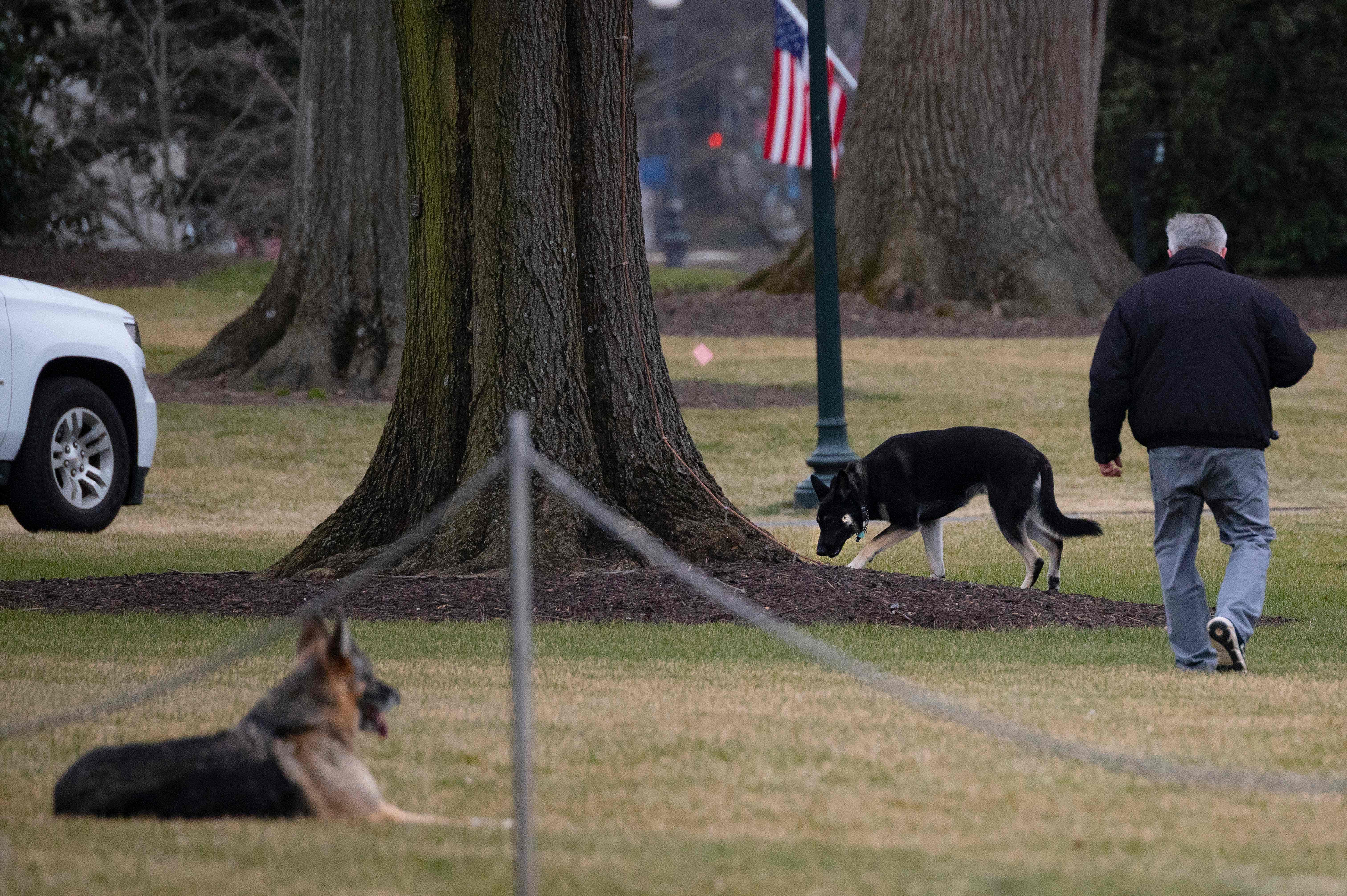 圖為兩頭「白宮第一狗」Champ和Major,25日在白宮南草坪上活動。    法新社