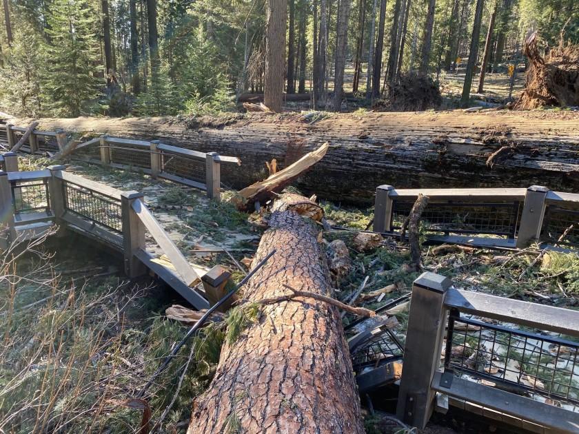 公園內的木板步道遭樹幹壓毀。優勝美地國家公園