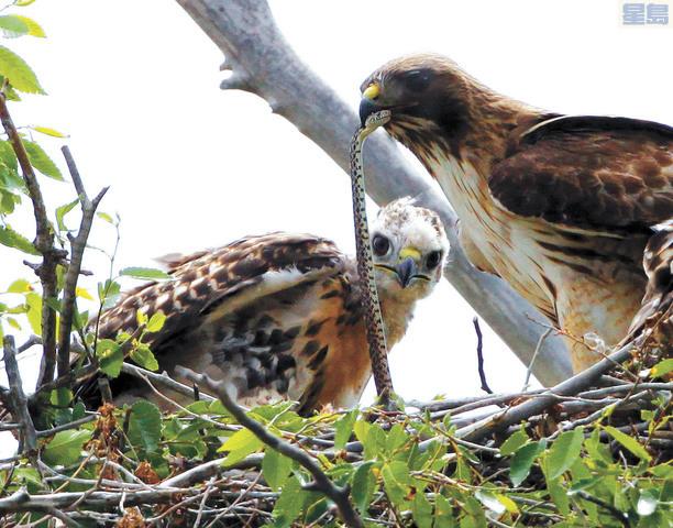 特朗普卸任前修改多項環境保護法規,包括會削弱對候鳥的保護。美聯社資料圖片