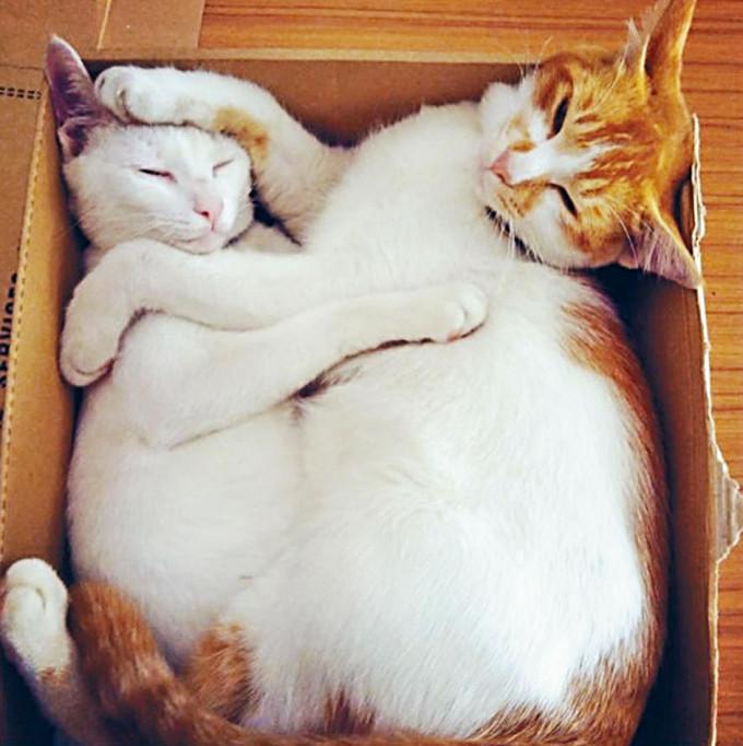 居於長洲警署的「警貓」「小白」(左)與「哈姆」(右)相擁午睡。