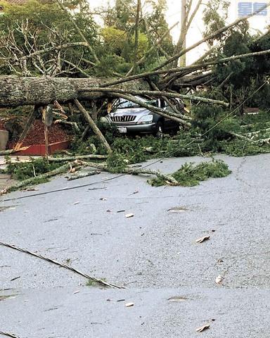 灣區多處都有大樹被強風吹倒。